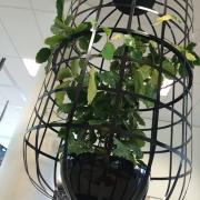 Buitelaar Metaal - Hangende plantenkooi