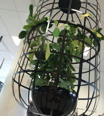 Beplanting - hangende plantenkooi